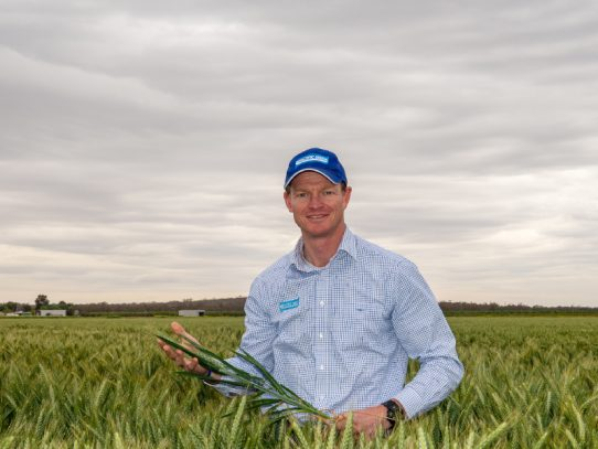 Reap what you sow – Seed provides critical ingredient for Australian dairy