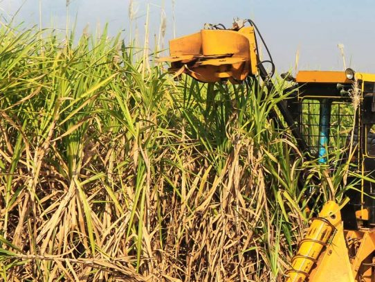 Sugarcane growers manual