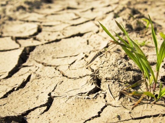 Drought acknowledgement welcomed by time for a bigger discussion