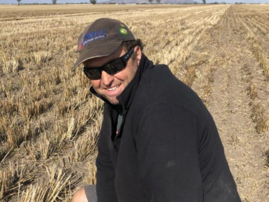 Graze and grain canola: the crop that keeps on giving