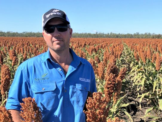 Aussie growers urged to plant swiftly and strategically as summer approaches