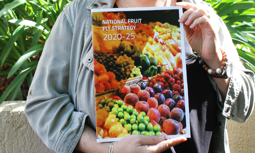 Blueprint for national cooperation on fruit fly released