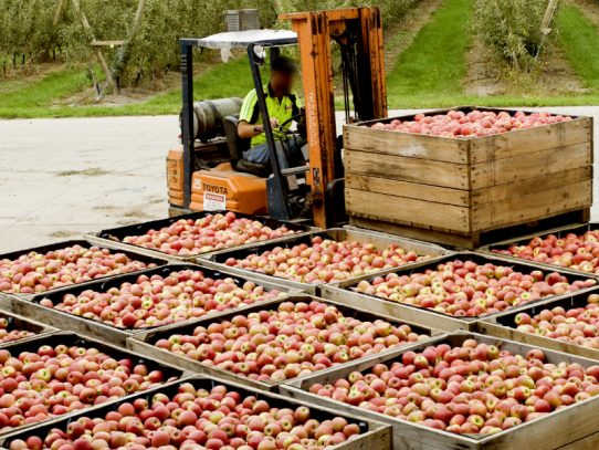 Biosecurity essentials: orchard harvest outputs